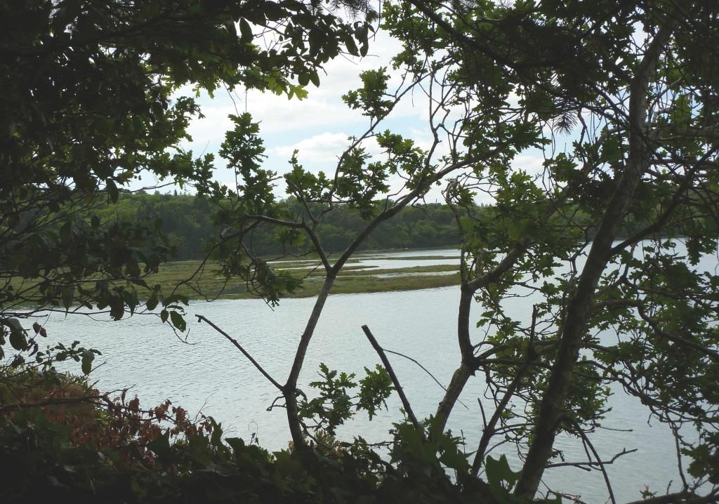 CK bois riviere (14)