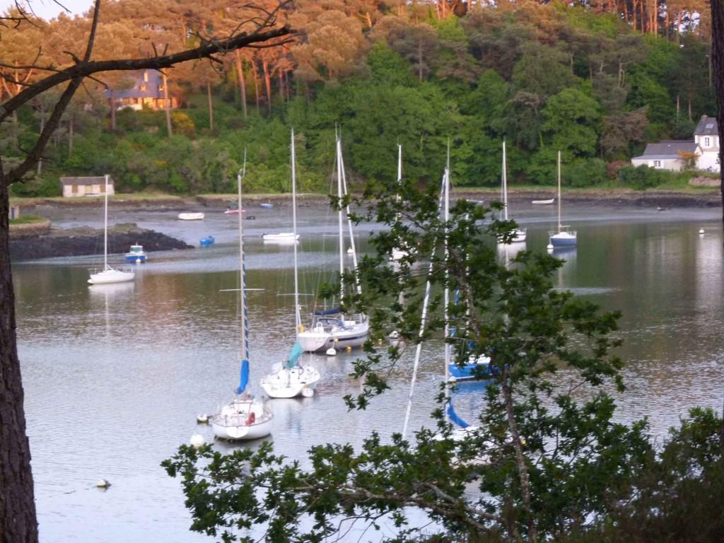 CK bois riviere (2)