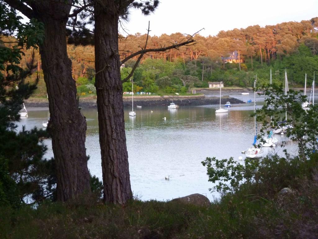CK bois riviere (26)