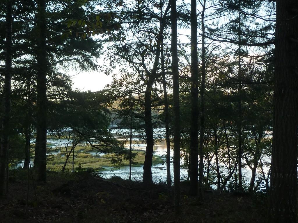 CK bois riviere (36)