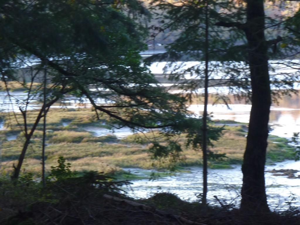 CK bois riviere (37)