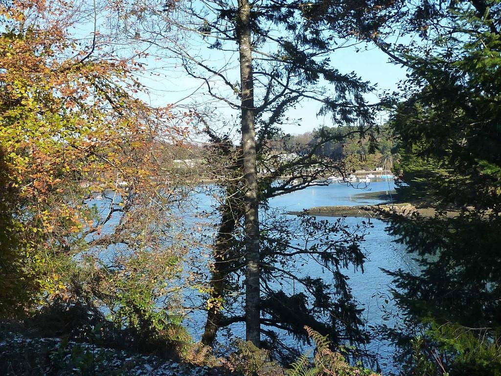 CK bois riviere (45)